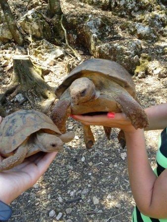Volimes, Grecia: Черепахи тоже гуляют, где им вздумается, смотрите под ноги!