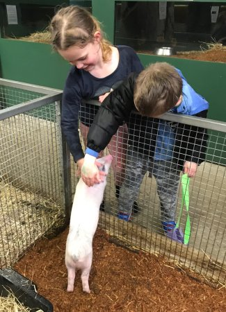 Gunns Plains, ออสเตรเลีย: Kids loved the hands-on encounters