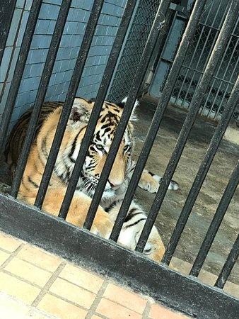 Nikolaev Zoo: photo1.jpg