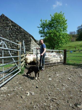 Llanfor, UK: Pen Uchaf Farm