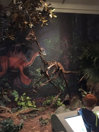 Carnegie Museum of Natural History: photo7.jpg