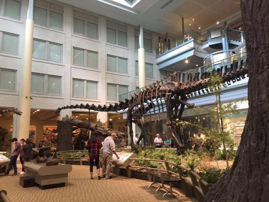 Carnegie Museum of Natural History: photo8.jpg