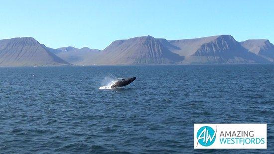 Isafjordur, أيسلندا: Amazing Westfjords
