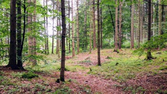 Rosegg, Austria: parco