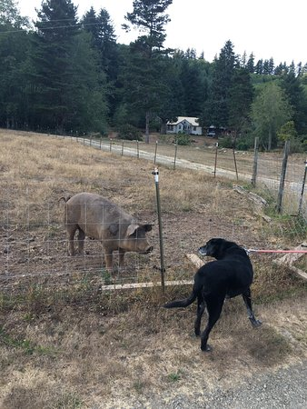 Beaver, OR: Some pictures of the amazing property and animals on the ranch!!!