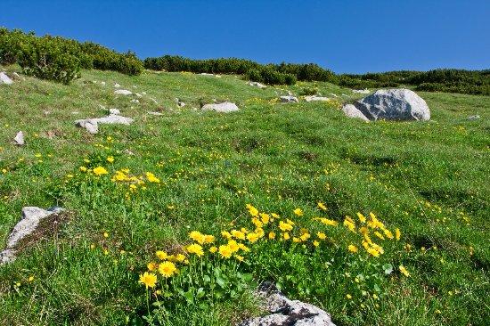 Parco Nazionale della Majella : Fioriture nel Parco della Majella