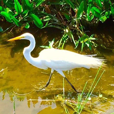 Boynton Beach, FL: photo9.jpg