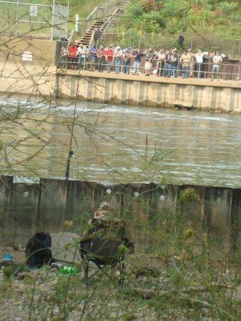 Allegan Dam fishing, Allegan MI