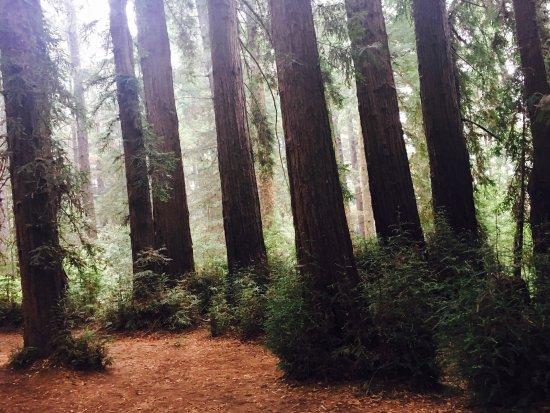 Felton, CA: Redwoods Roaring Camp