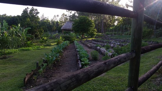 Blancaneaux Lodge: The organic garden