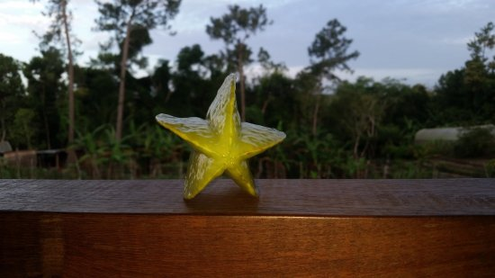 Blancaneaux Lodge: Some fresh star fruit picked fomr the garden