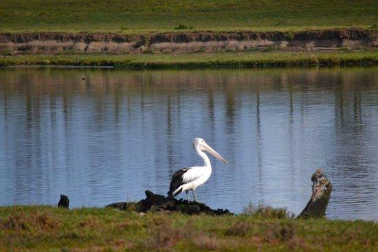 Grahams wetland reserve