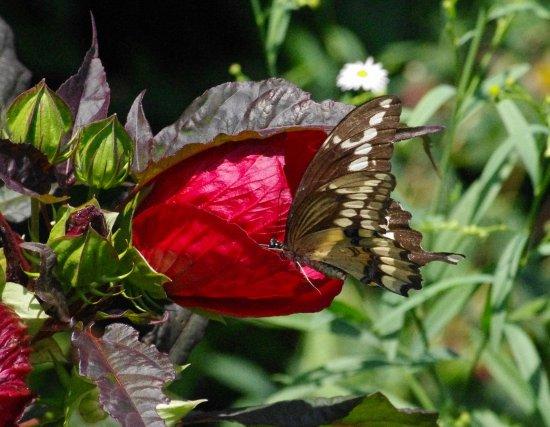 Ringwood, NJ: butterfly