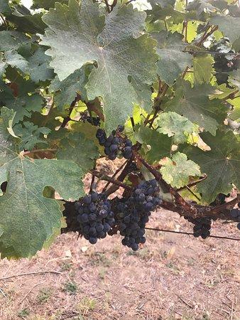 Cave B Estate Winery Quincy Tasting Room: photo7.jpg
