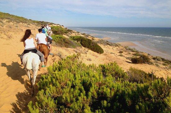Paseo por el Parque Nacional Doñana o...