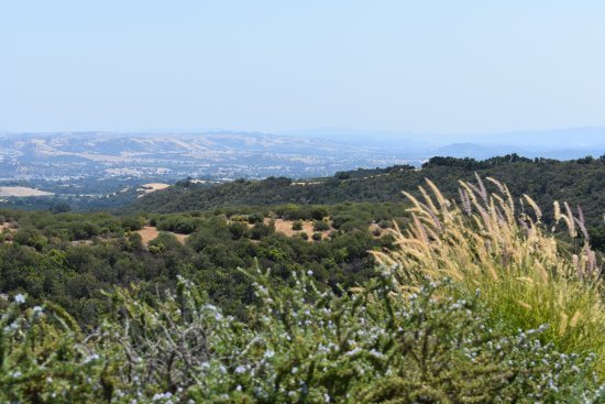 Calcareous Vineyard: Paso Robles / Classic California Views