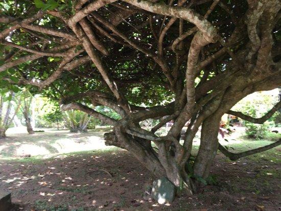 Dalmanuta Gardens - Ayurvedic Resort & Restaurant : photo6.jpg