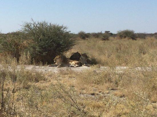 Национальный парк Макгадикгади-Панз, Ботсвана: Nxai Pan Camp