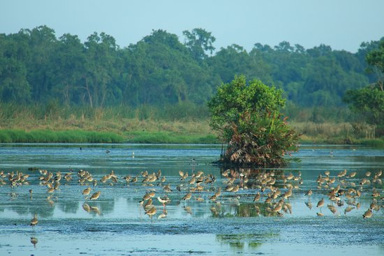 Kalamatiya Bird Sanctuary