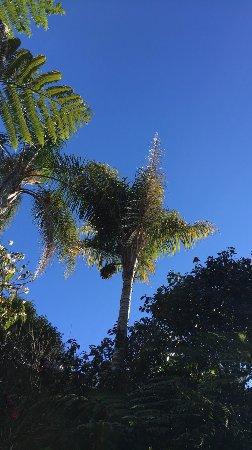 Eden Garden張圖片