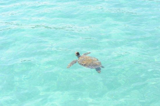 Moreton Island, Australie : So many beautiful marine creatures