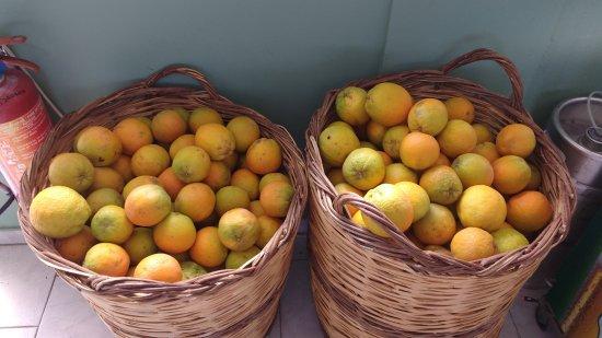 Glykeria: Oranges