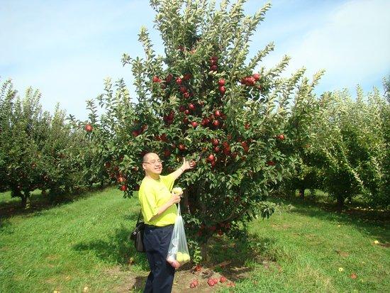 LaPorte, IN: apple picking