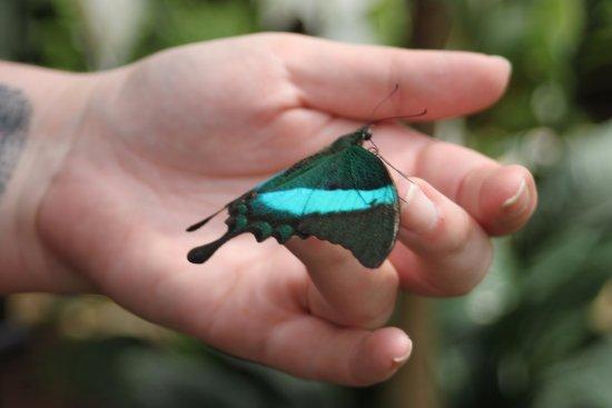 Jardin Des Papillons: Zauberhafte Welt der Schmetterlinge
