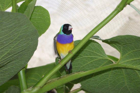 Jardin Des Papillons: nicht nur Schmetterlinge
