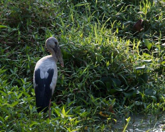 Talangama Wetland: At the lake