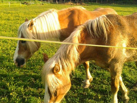 Vicchio, Italien: Le mie cavalle