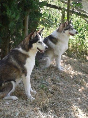 Vicchio, Italien: i miei cani