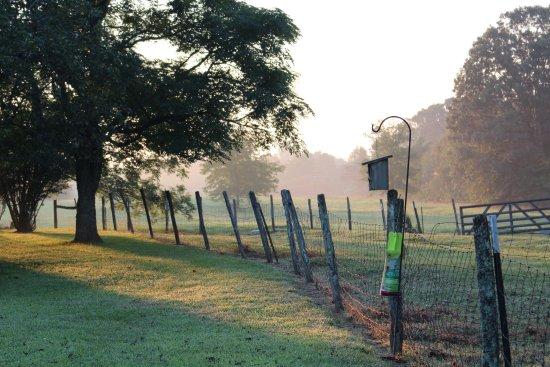 Salem, Carolina del Sur: Livestock pasture.