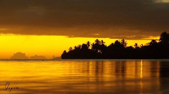 La Rose du Brésil : coucher de soleil en or
