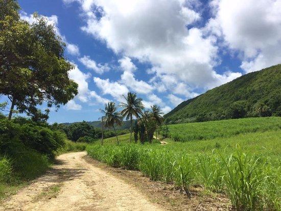 Capesterre, Guadeloupe: Les sentiers de la canne à Marie-Galante