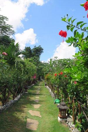Milo's Home: Fleurs d'hibiscus sur l'allée desservant les bungalows