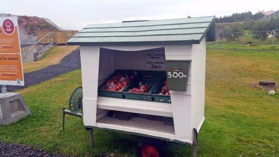Reykholt, Island: Carretto dei pomodori... geotermici!