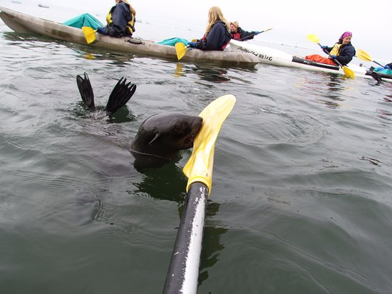 「kayak namibia」的圖片搜尋結果