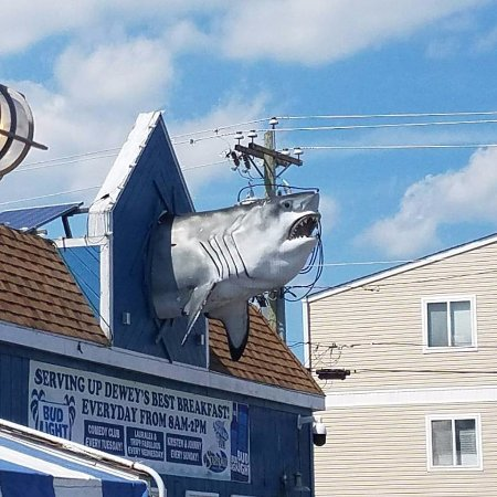 The Starboard: The shark draws you in...