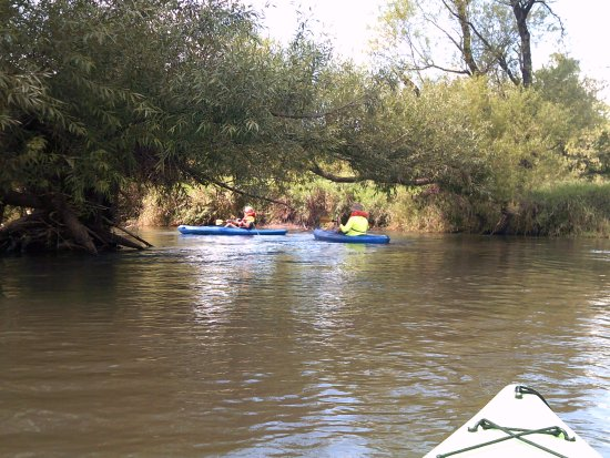 Pine River Paddle and Tube LLC: Views from the Pine River