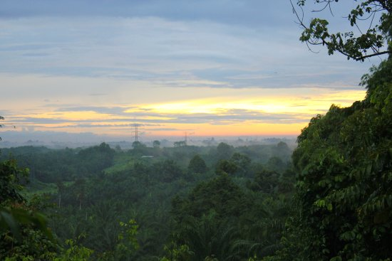 Paganakan Dii Tropical Retreat: Amazing morning rainforest canopy