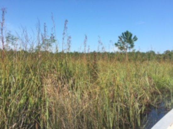 Swamp Tours Mississippi Gulf Coast