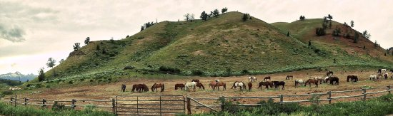 Kelly, WY: Sunday is a day off for the horses