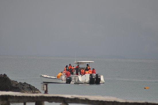 Hotel Libertalia: le bateau pour les sorties baleines..toujours en toute sécurité
