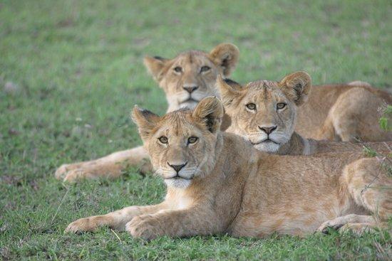 Choroa Luxury Safaris