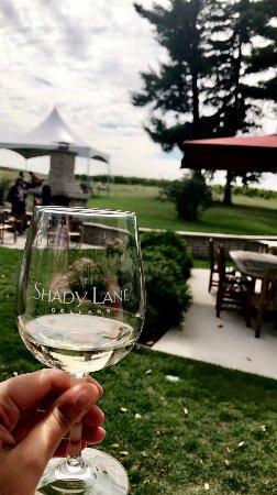 Shady Lane Cellars: Outside by vineyard