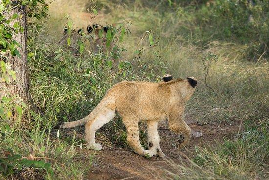 Pondoro Game Lodge: Auf Safari