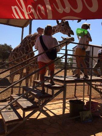 Pafos Zoo: photo1.jpg