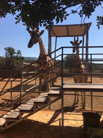 Pafos Zoo: photo3.jpg