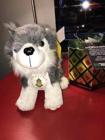 Hotel FIVE - A Staypineapple Hotel: Purchase this dog and make a donation to charity for animals!